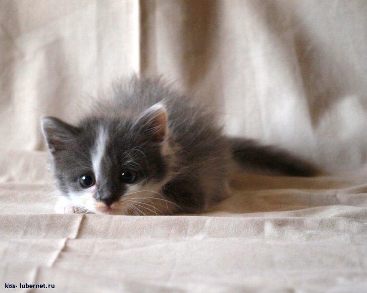 Фотография: котейка-1.jpg, пользователя: kiss