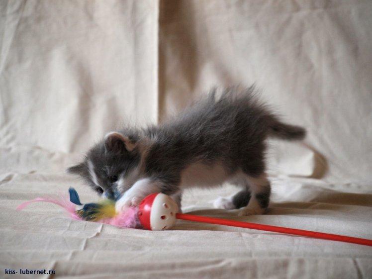 Фотография: котейка-3.jpg, пользователя: kiss