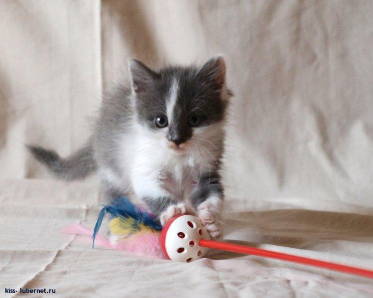 Фотография: котейка-9.jpg, пользователя: kiss