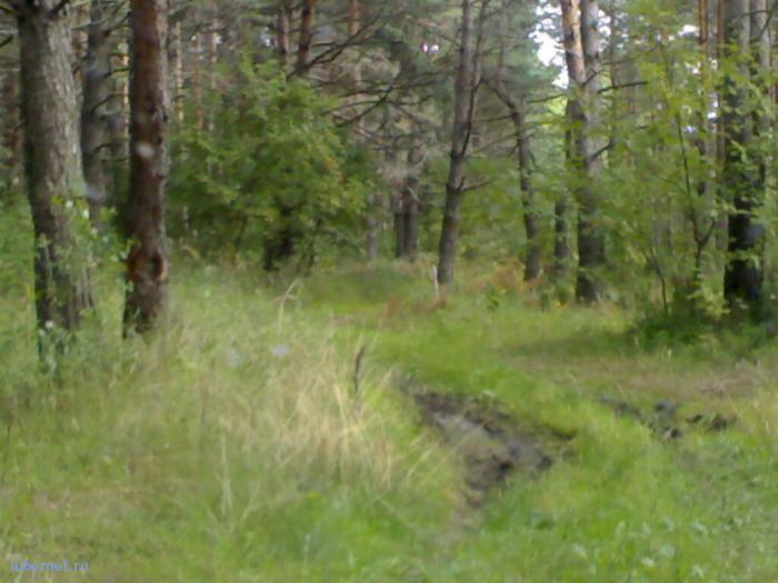 Фотография: Дорога по-лесу, пользователя: Flaw