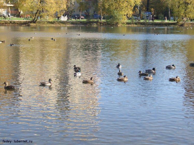 Фотография: Наташинские пруды, пользователя: fadey