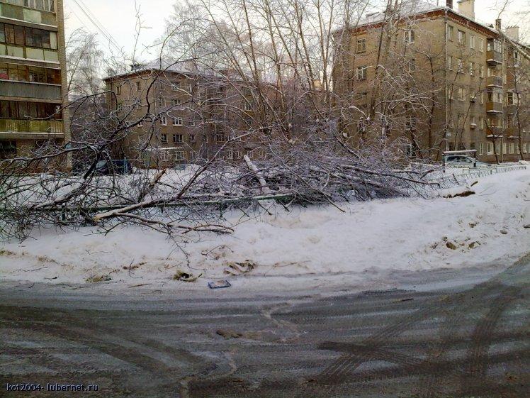 Фотография: ветки_1.jpg, пользователя: kot2004