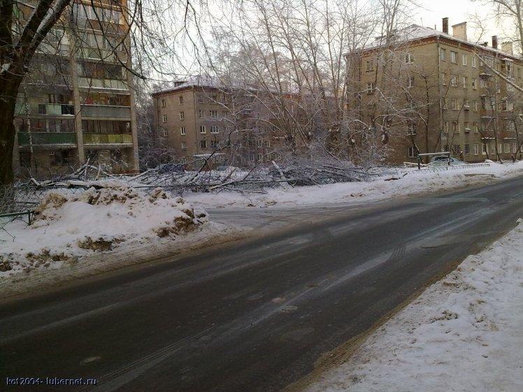 Фотография: ветки _2.jpg, пользователя: kot2004