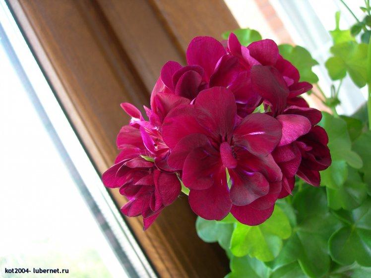 Фотография: DSCN3701.JPG, пользователя: kot2004