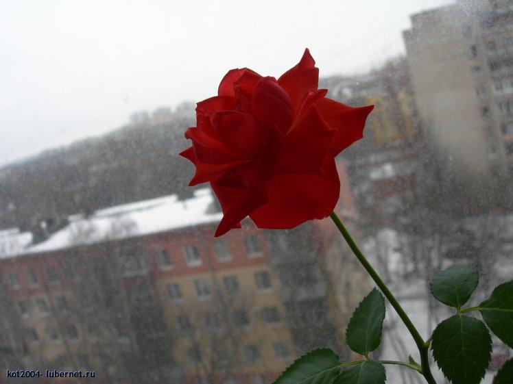 Фотография: DSCN4105.JPG, пользователя: kot2004