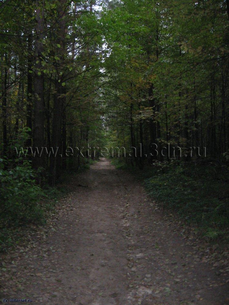 Фотография: Лес.jpg, пользователя: KLЬlK