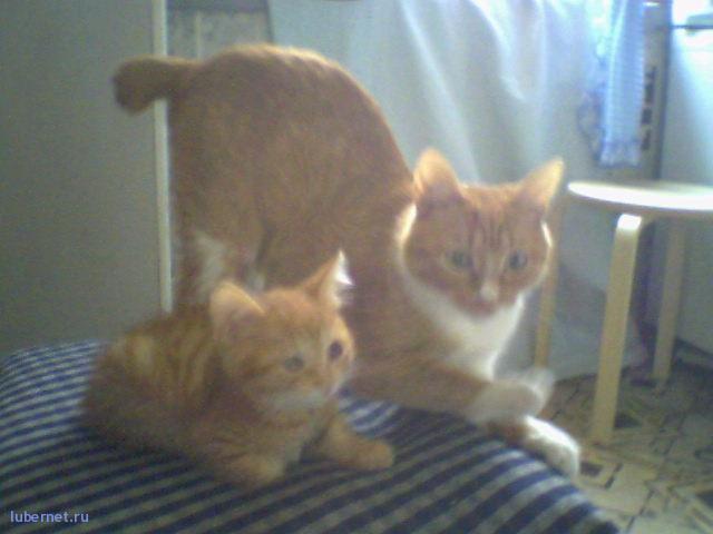 Фотография: а это она с мамой, пользователя: kleo
