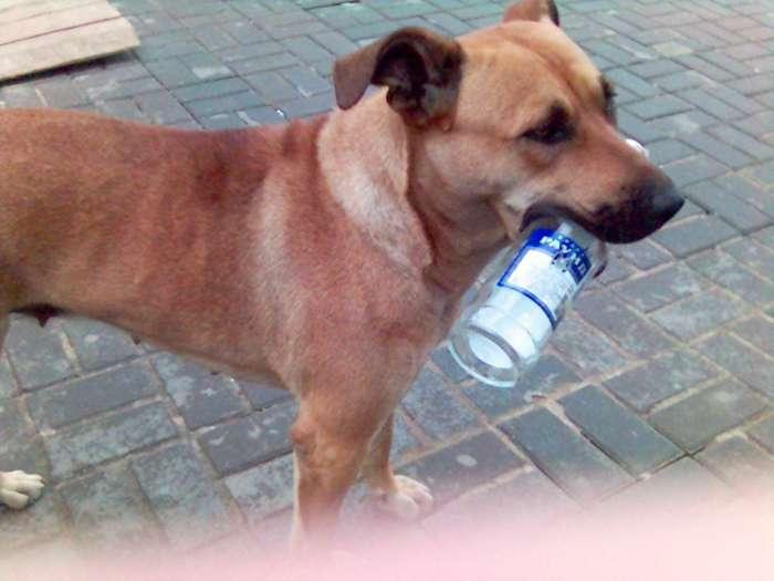 Фотография: Собака алкаш, пользователя: Санёчек