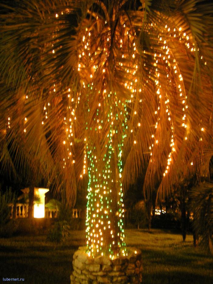 Фотография: пальма, пользователя: Мишаня