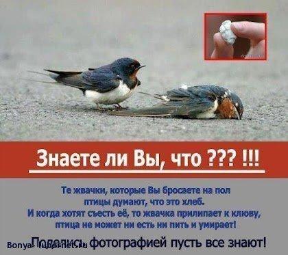 Фотография: 253202_304316242992968_146282643_n.jpg, пользователя: Bonya