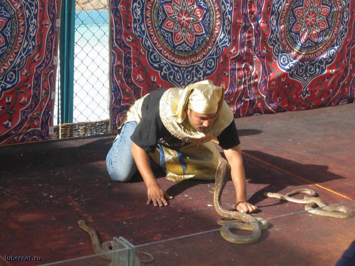 Фотография: Укротитель змей, пользователя: gorka