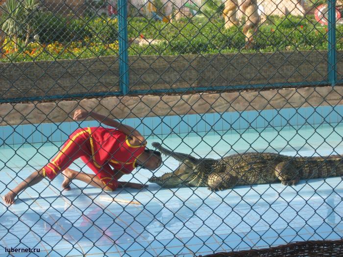 Фотография: Шоу крокодилов, пользователя: gorka
