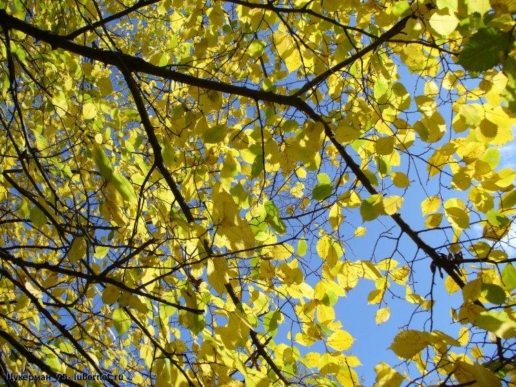 Фотография: P1040397 (Наташинский парк).JPG, пользователя: Цукерман