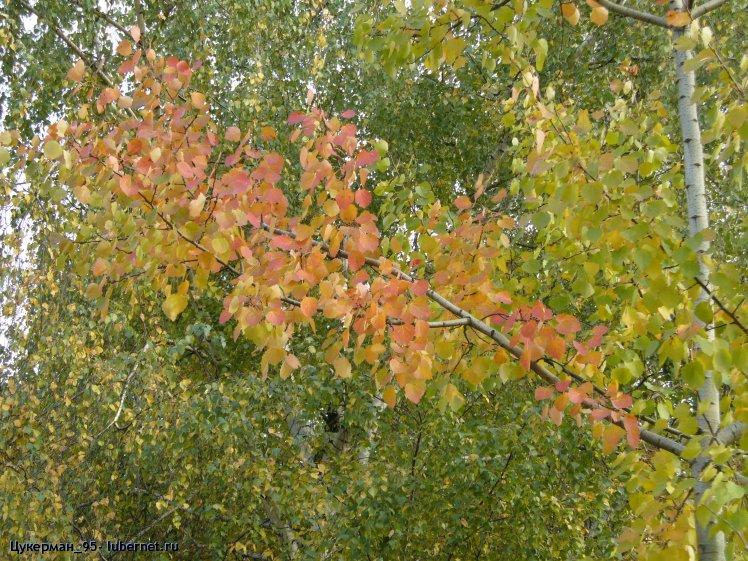 Фотография: P1000018 (Наташинский парк).JPG, пользователя: Цукерман