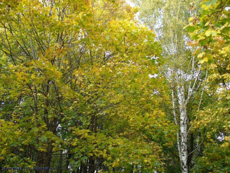 Фотография: P1000036 (Наташинский парк).JPG, пользователя: Цукерман