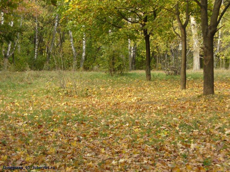 Фотография: P1000053 (Наташинский парк).JPG, пользователя: Цукерман