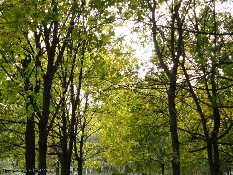 Фотография: P1000042 (Наташинский парк).JPG, пользователя: Цукерман