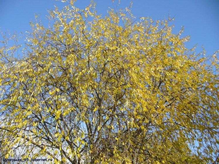 Фотография: P1000269 (Наташинский парк).JPG, пользователя: Цукерман