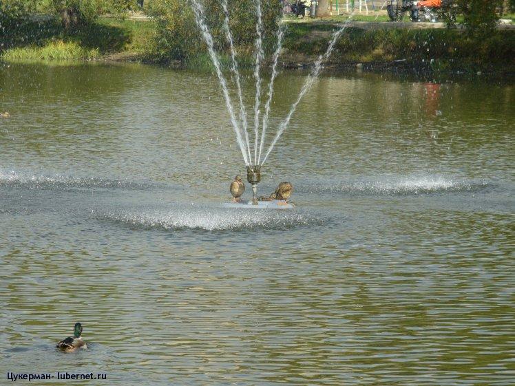 Фотография: P1010321 (Наташинский парк).JPG, пользователя: Цукерман