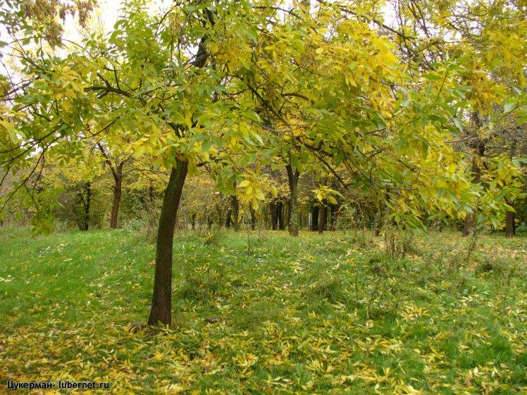 Фотография: P1010377 (Наташинский парк).JPG, пользователя: Цукерман