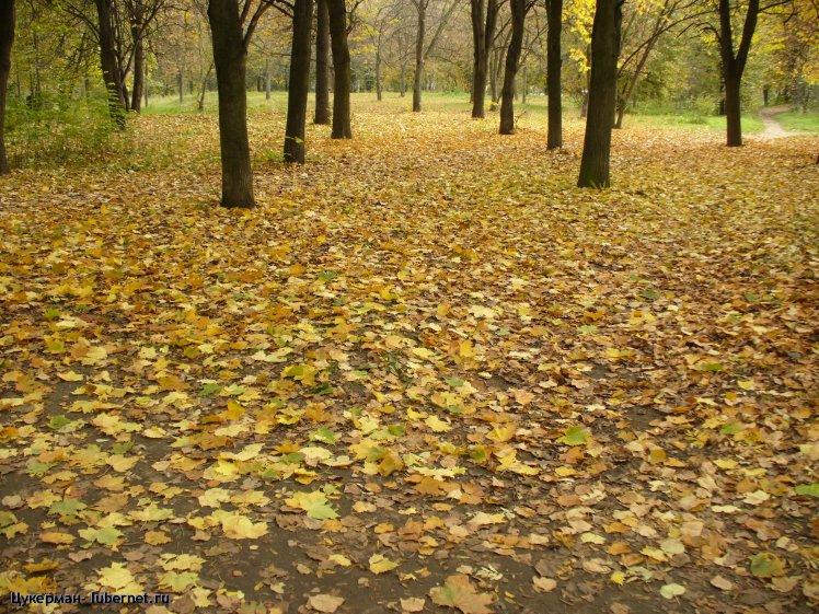 Фотография: P1010445 (Наташинский парк).JPG, пользователя: Цукерман