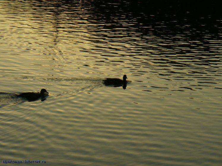 Фотография: P1010637 (Наташинский парк).JPG, пользователя: Цукерман