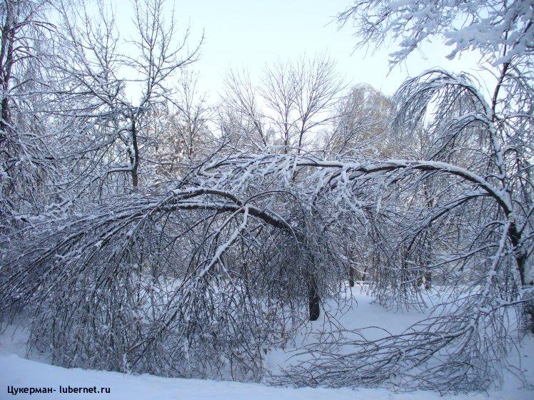 Фотография: P1010988 (Наташинский парк).JPG, пользователя: Цукерман