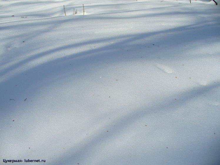 Фотография: P1020268 (Наташинский парк).JPG, пользователя: Цукерман