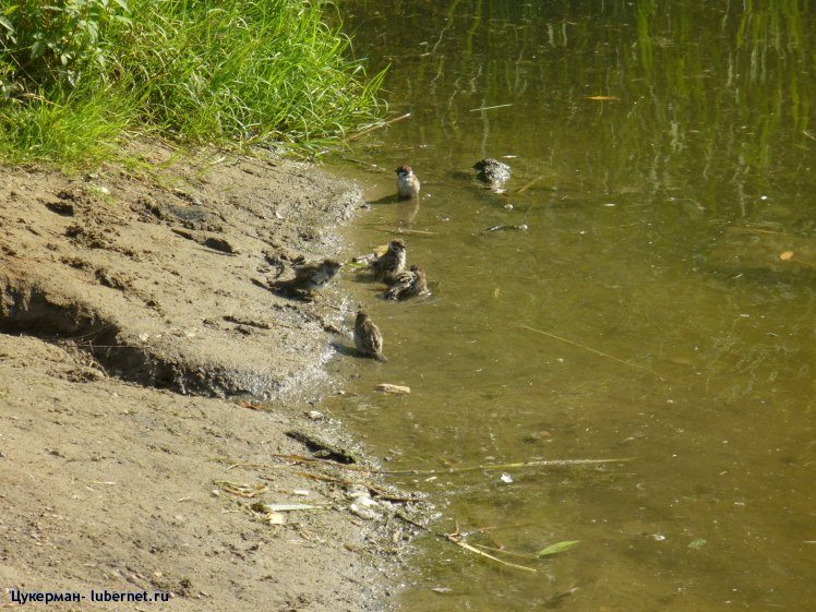 Фотография: P1000128 (Наташинский парк).JPG, пользователя: Цукерман