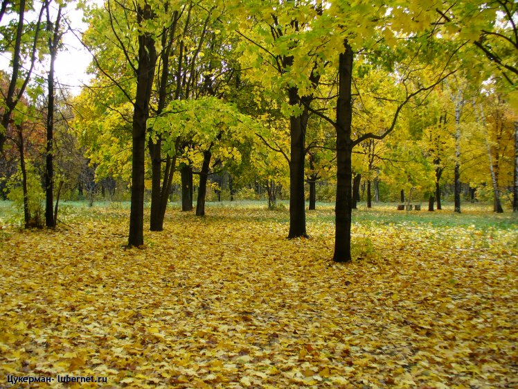 Фотография: P1000116 (Наташинский парк).JPG, пользователя: Цукерман