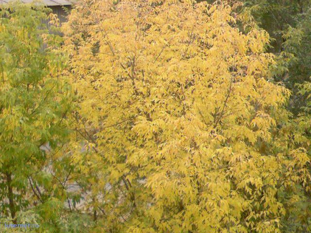 Фотография: Солнечное дерево, пользователя: Sandy